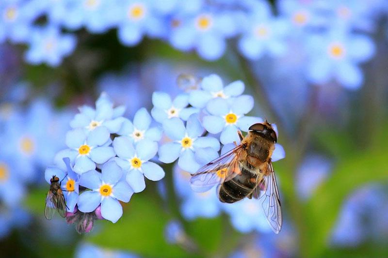 abeille-miel-loir-et-cher