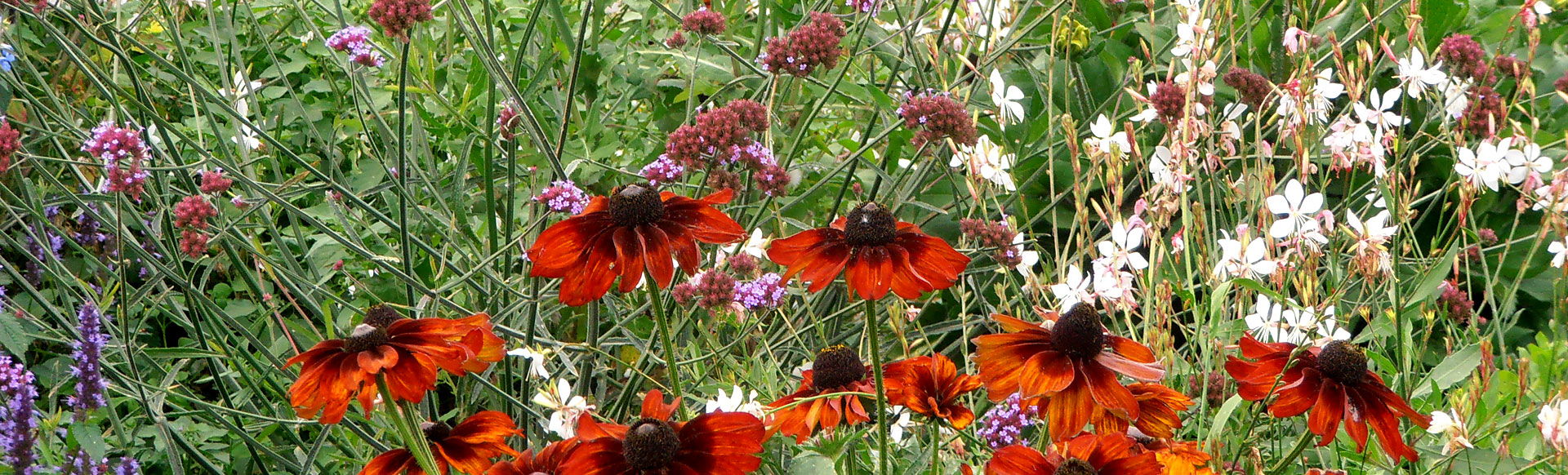 fleurs-region-centre-loir-et-cher