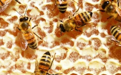 Le coffret miel raconte les abeilles